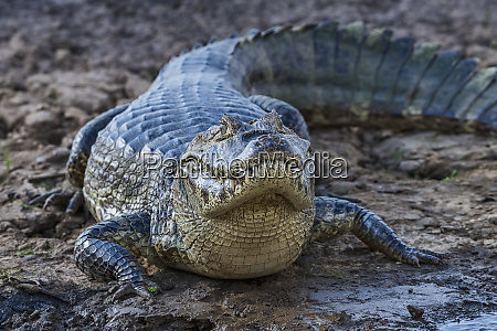 brasilien pantanal 2019 20184