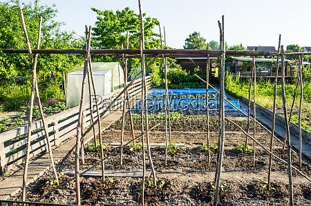 frische junge saitenbohnenpflanzen mit stangen