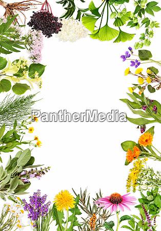 rahmen, mit, den, wichtigsten, heilpflanzen - 27446846