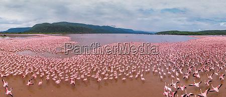 luftaufnahme von flamingos am bogoria see