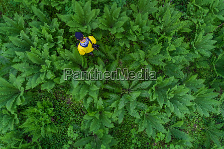 aerial view man alone on forest