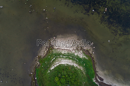 aerial view of coast forest at