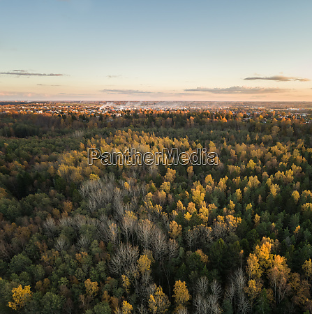 aerial view of a colorful pines