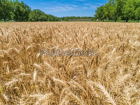 luftaufnahme der maislandwirtschaft in correze frankreich