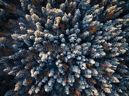 luftaufnahme eines schneebedeckten waldes