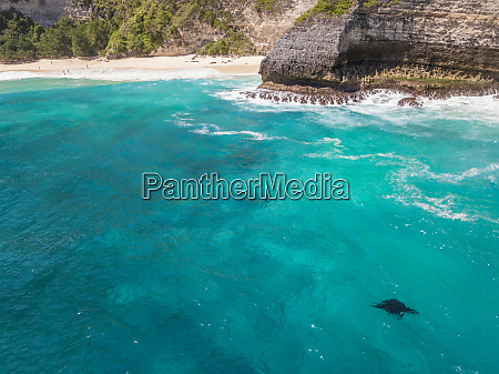 aerial view of two manta rays