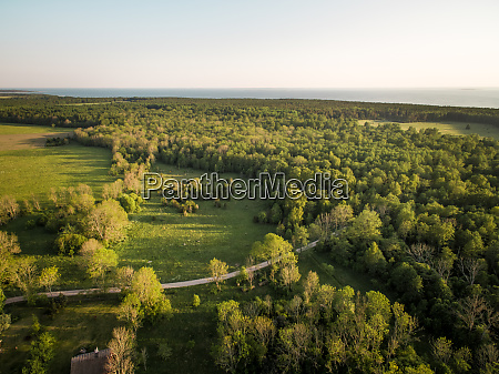 aerial view of forest in countryside