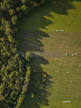 aerial view of forest and straw