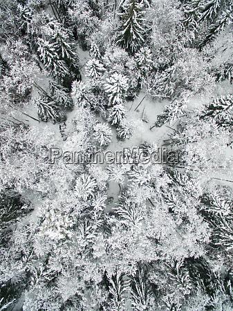 luftaufnahme des verschneiten waldes