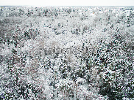 aerial view of snowy forest