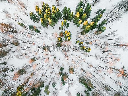 luftaufnahme eines verschneiten waldes