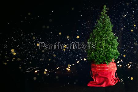 weihnachtsbaum auf schwarzem hintergrund