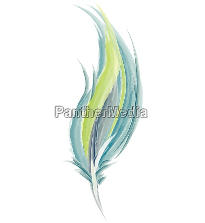 light green and blue feather vector
