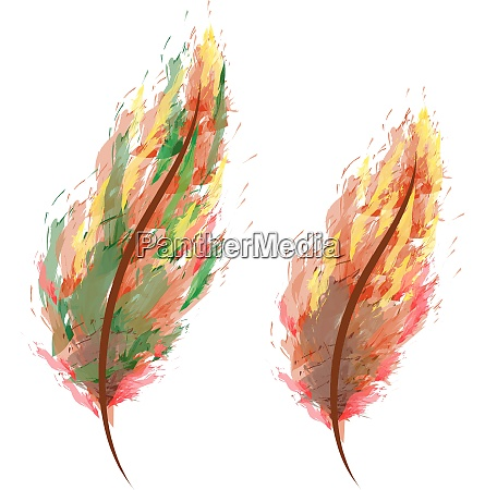 water color feathers in shades vector
