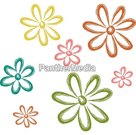 aster flower vector or color illustration