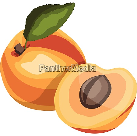 apricot with green leaf cartoon