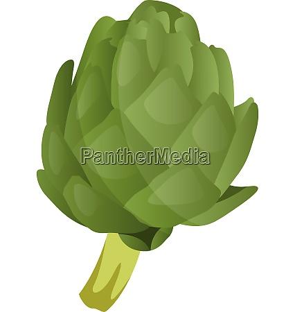 green artichoke vector illustration of vegetables