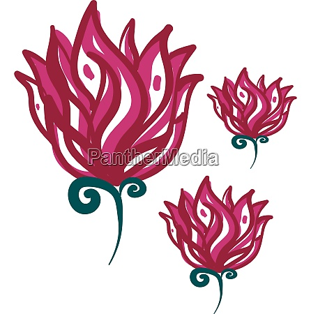 drawing of red rose vector or