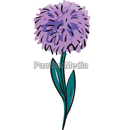 purple aster flower illustration