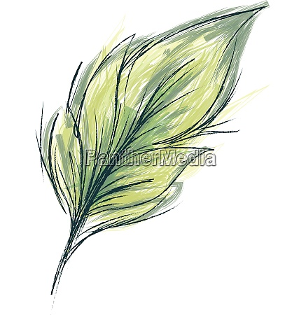 feather with green threads vector or