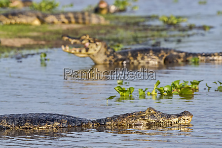 brasilien pantanal 2019 20228
