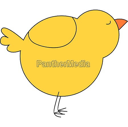 yellow chick vector or color illustration