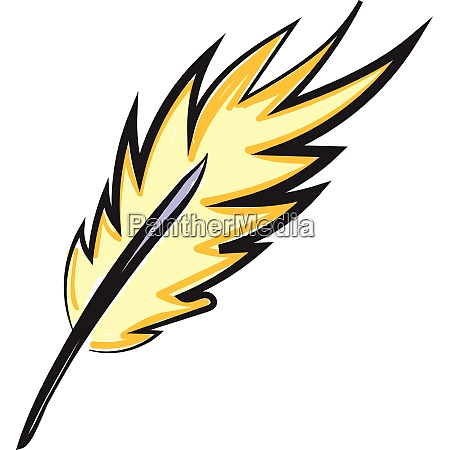 yellow feather vector or color illustration