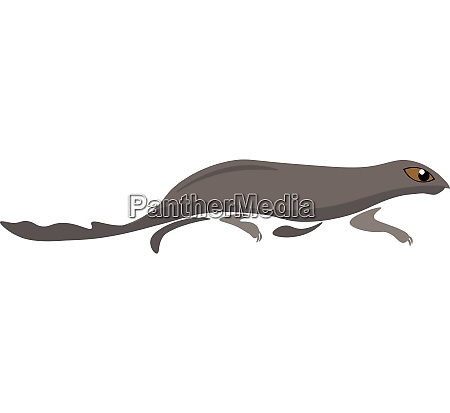 clipart of the mammal mongoose vector