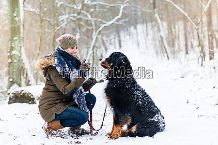 frau zu fuss berner berghund an