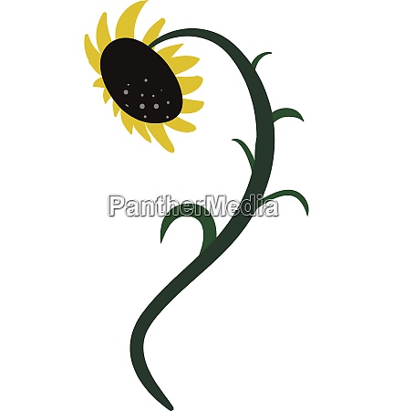 drawing of a sunflower vector or