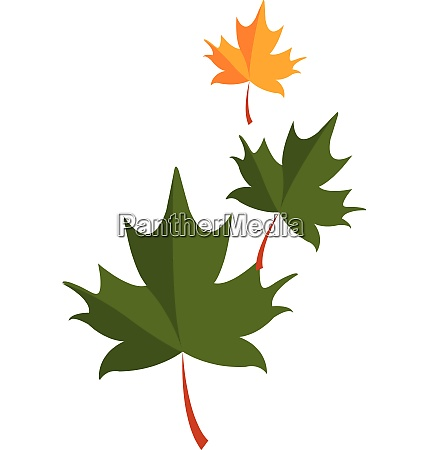 green leaves vector or color illustration