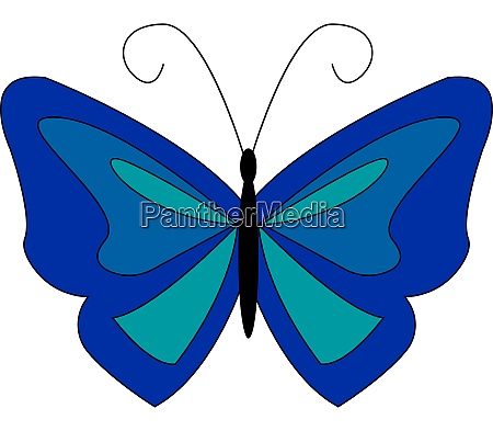 a blue butterfly vector or color