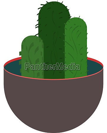 green cactus illustration vector on white