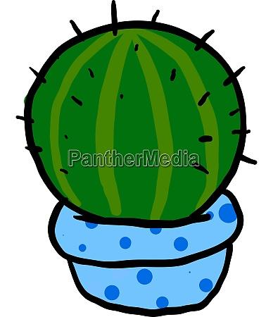 basic rgfat cactus in blue pot