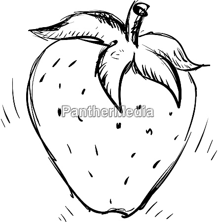 strawberry drawing illustration vector on white
