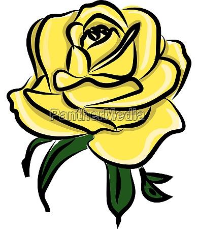 yellow rose illustration vector on white