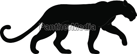 grosser schwarzer panther illustration vektor auf