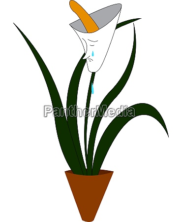 sad white flower vector or color