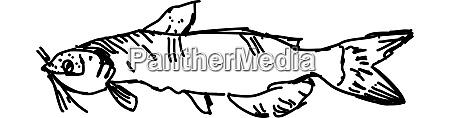 fish sketch illustration vector on white