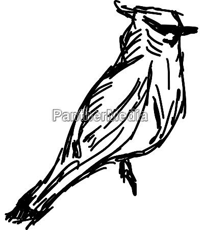 bird sketch illustration vector on white