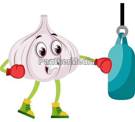 garlic boxing illustration vector on white