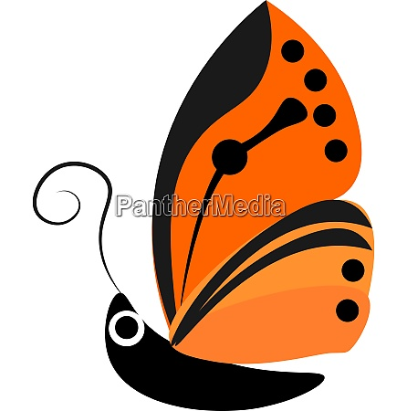 butterfly vector or color illustration