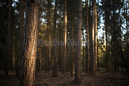 lovely, late, summer, forest, landscape, with - 27527985