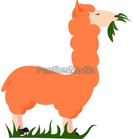 orange lama illustration vektor auf weissem