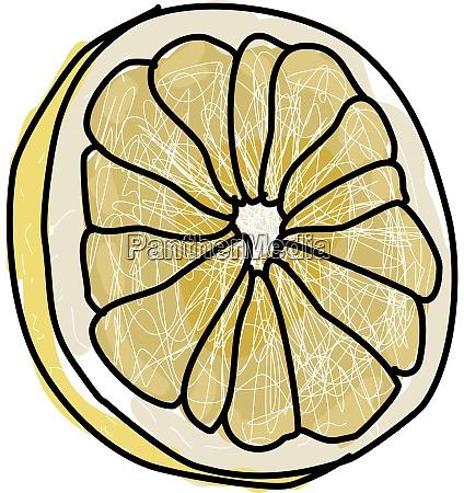 white grapefruit illustration vector on white
