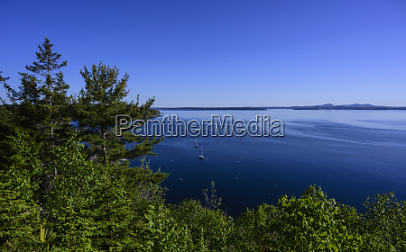 forest by sea in acadia national