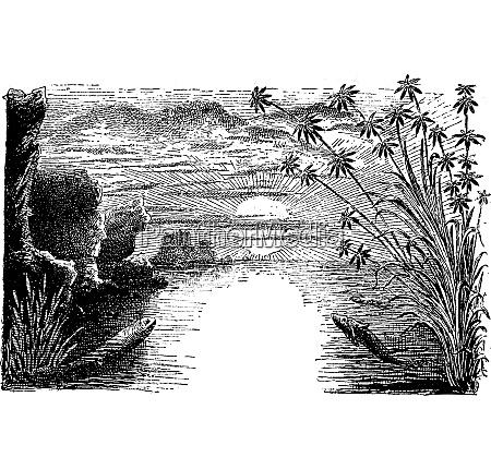 die permzeit amphibien und reptilien vintage