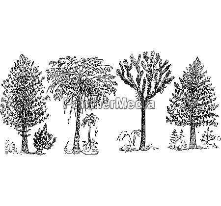reconstruction of the great plants of