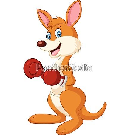 cartoon kangaroo boxing isolated on white