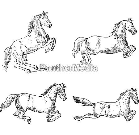 klassische pferd dressur bewegungen vintage gravur